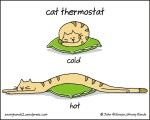 cat thermostat