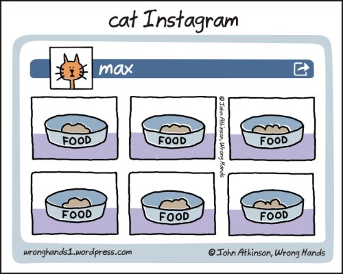 cat Instagram page