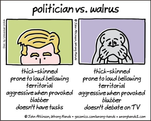 politician-vs-walrus
