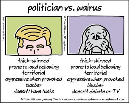 politician-vs-walrus
