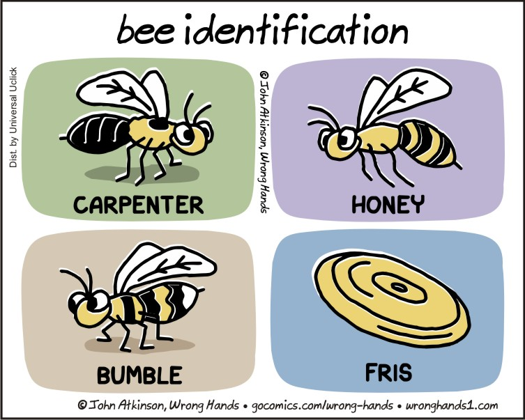 https://wronghands1.files.wordpress.com/2017/08/bee-identification.jpg