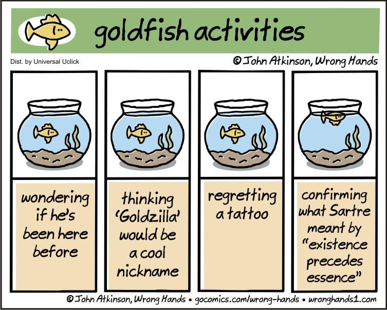 goldfish activities